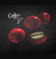 chalk drawn sketches set coffee berries vector image vector image