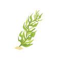 green seaweed in cartoon flat vector image