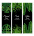 tropical exotic leaves banners template set vector image