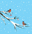 bullfinch under the snowfall vector image vector image