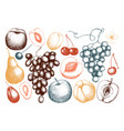 fruits and berries set vector image vector image