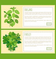oregano and parsley thick bunches on banners set vector image vector image