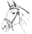 race horse without a harness drawn in ink hand vector image