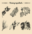 set of vintage herbs elements of brewery vector image
