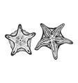 starfish fish sketch engraving vector image