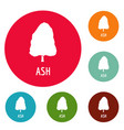 ash tree icons circle set vector image