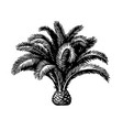 ink sketch pygmy date palm vector image vector image