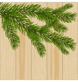 Two green spruce branches on the background of vector image vector image
