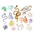 collection of beautiful snakes of various type vector image