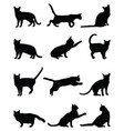 black silhouettes cats vector image