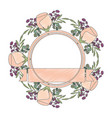 frame with rose flower beautiful and ribbon vector image vector image