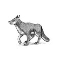 gray wolf gray wolf a predatory beast wild vector image vector image