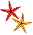 Starfish vector image vector image