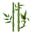 bamboo plant icon cartoon style