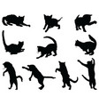 black silhouettes cats vector image vector image