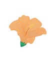 orange hibiscus tropical flower hand drawn vector image