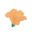 orange hibiscus tropical flower hand drawn vector image vector image
