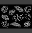white linear tropical palm leaves silhouettes set vector image