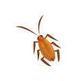 brown cockroach insect cartoon vector image vector image