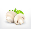 champingnon with parsley and lettuce vector image