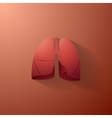 Human lungs with bronchial tree vector image