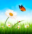 Nature spring daisy flower with butterfly vector image vector image