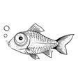 cartoon image of fish vector image vector image