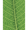texture of leaf vector image vector image