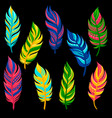 beautiful abstract bright colored feathers set vector image