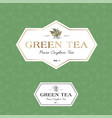 green tea logo seamless pattern label vector image vector image