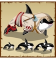 Set of killer whales and the armed orca vector image vector image