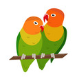 lovebird parrots icon in flat style vector image vector image