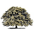 Oak tree vector | Price: 1 Credit (USD $1)