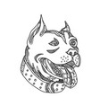 pit bull head doodle art vector image
