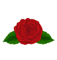 red rose with green leaves isolated on white backg vector image vector image