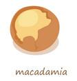 macadamia icon isometric 3d style vector image