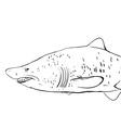 Great White Shark Underwater Sketch Black contour vector image
