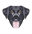 black labrador vector image vector image