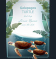 galapagos turtles summer sea card with vector image vector image
