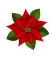 isolated poinsettia plant vector image vector image