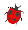 ladybug icon love and gifts for web on white vector image