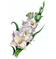 gladiolus flowers painted vector image