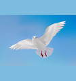 gull in blue sky vector image