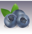 realisctic Blueberry vector image vector image