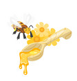 spoon of sweet honey vector image vector image