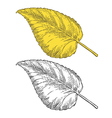 Autumn leaf in engraving style vector image vector image
