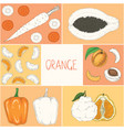 coloring book page orange fruits and vegetables vector image