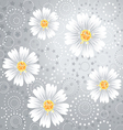 Daisy flowers on gray background vector image vector image