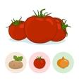 Icons Tomatoes Potato Onion vector image vector image