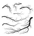 set of dry twigs on white background trees vector image vector image